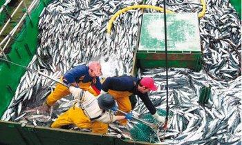 23 de abril: inicio de la primera temporada de pesca de anchoveta