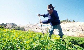 Bancos comerciales restringen créditos a agricultores por El Niño