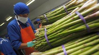 Perú es el primer exportador mundial de espárragos frescos