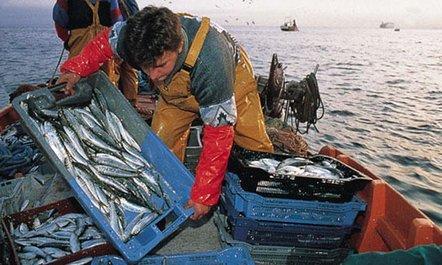 El crecimiento del 2015 estaría impulsado por la pesca y la minería metálica