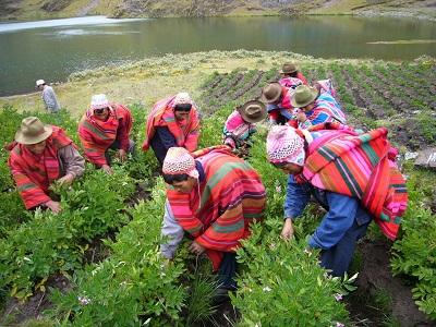 Perú fortalece su oferta de Cooperación Sur-Sur a fin de luchar contra el hambre a nivel mundial