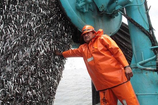 Produce autoriza primera temporada de pesca de anchoveta