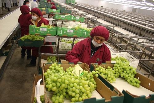 Exportaciones no tradicionales acumularon 18 meses de crecimiento consecutivo