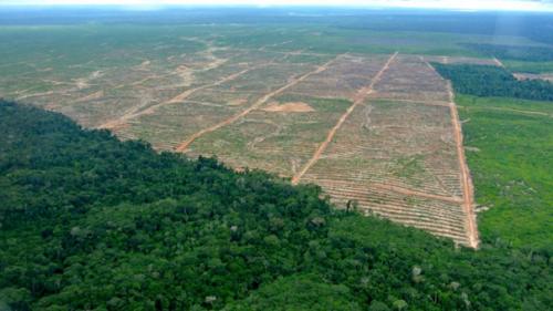 Día mundial del medio ambiente: Tarea de todos