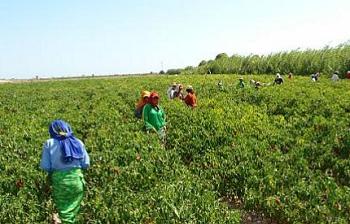 Percepciones y objeciones: la ampliación de la Ley de Promoción Agraria