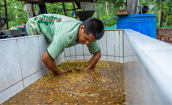 """""""Café circular"""": un proyecto de Países Bajos en Perú con una inversión de 3 millones de euros"""