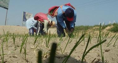 El Plan Nacional de Agricultura Familiar busca mejorar el ingreso del productor agrario