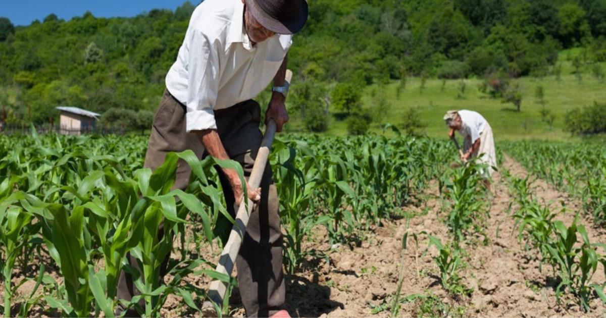 S/ 600 MILLONES PODRÁN SER ADQUIRIDOS POR PROGRAMAS DEL MIDIS A PEQUEÑOS AGRICULTORES